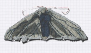 I'm working on moths now to accompany the birds.  This is the first example.